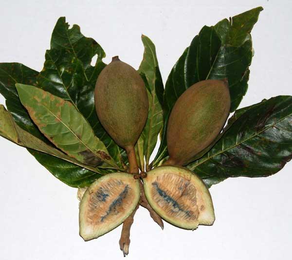 fruit jagua