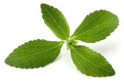 feuille de stevia sucre